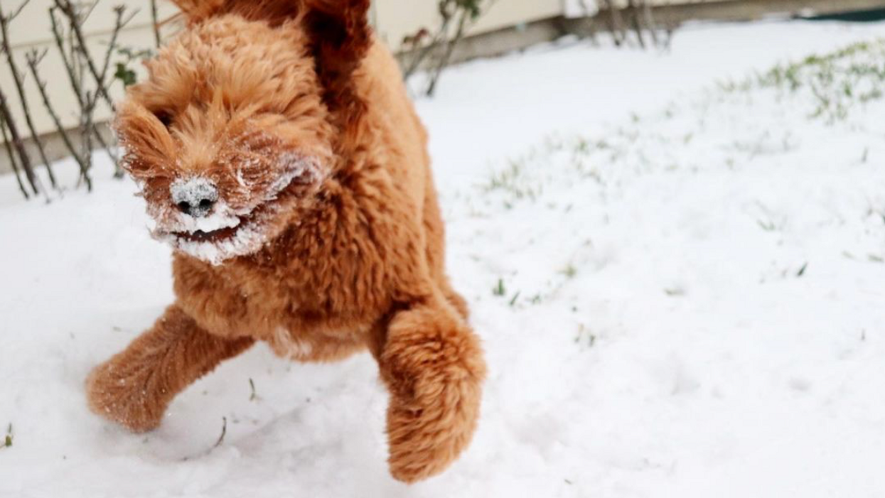 We Are Kind of Enjoying the Blizzard ... of Wild Snow-Day Pics