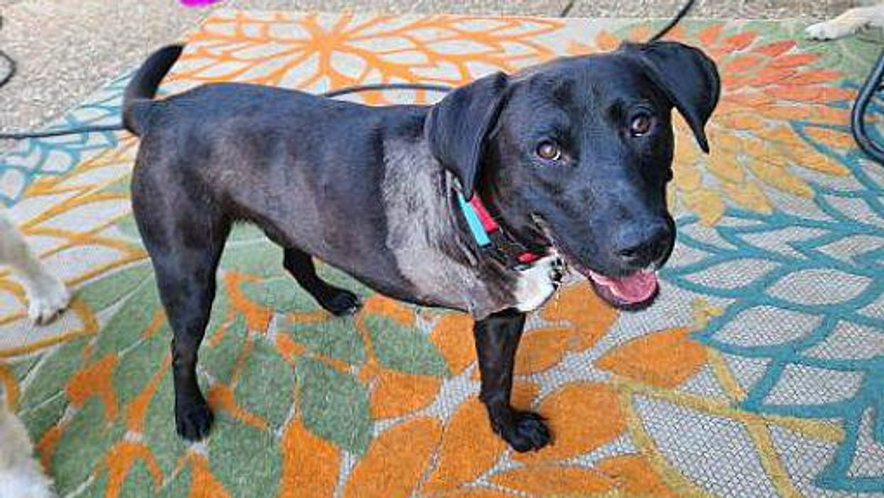 Three Legs and One Big Heart – Mack is Ready for His Forever Home