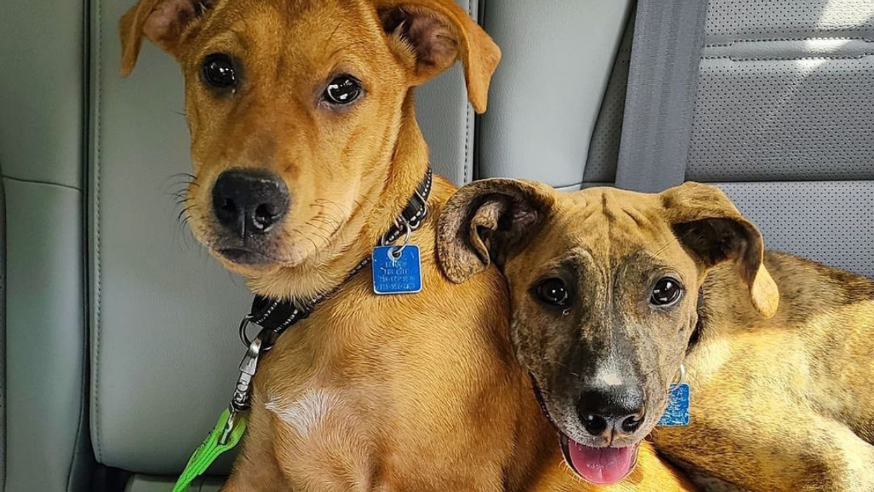 Sister Act! These Adorable Siblings Are Ready to Be Your Lifetime Companions