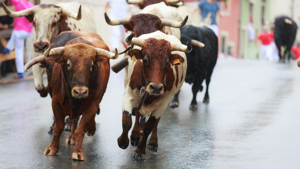 Get off the Sidewalk, and Run with the Bulls — and Life Itself — in the Middle of the Street!